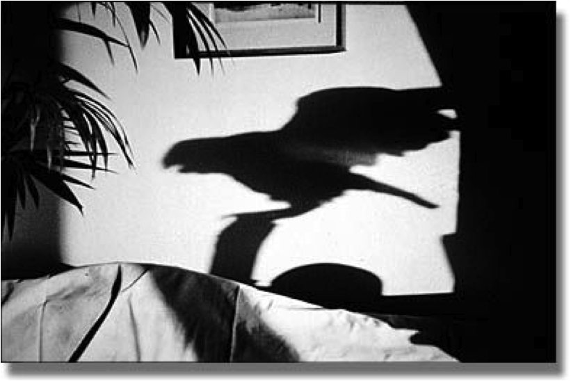 Photo noir et blanc prise par Hervé Guibert