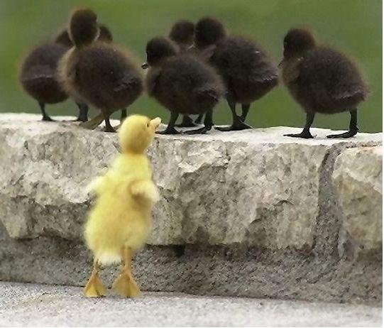 JE SUIS DIFFÉRENT 1 Vilain petit canard