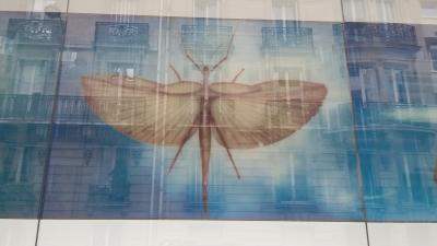En passant à côté du Musée Quai Branlette (le Papillon Antéchrist)